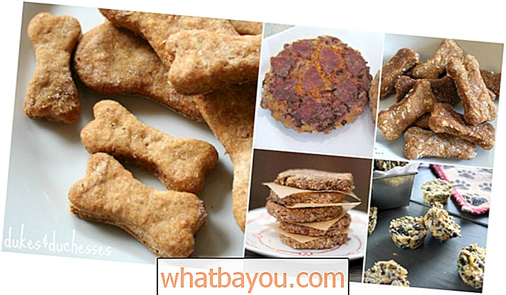25 Lip Smacking Homemade Healthy Food Recipes Dog Pooch Anda Akan Suka